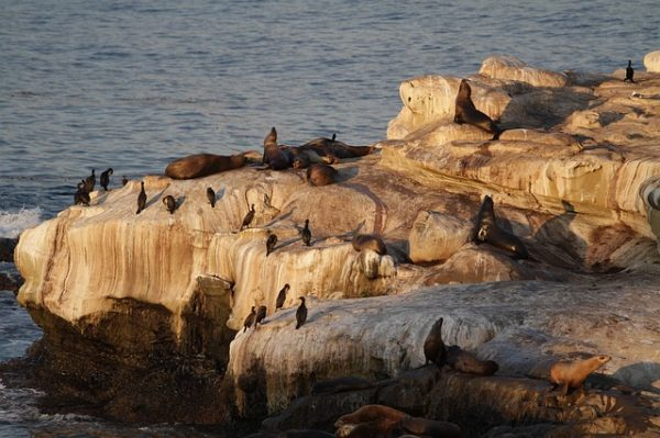 17-mile-drive-Monterey-seal-rock