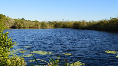 Photo of Anhinga Trail, Everglades National Park. Sla deze hike niet over!