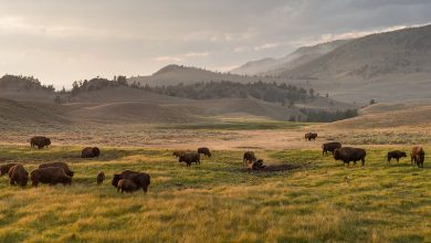 Photo of Hier vind je wilde dieren (wildlife) in Yellowstone National Park.
